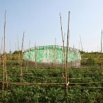 bottle_house_vietnam_02